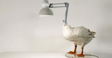 lampa-gus