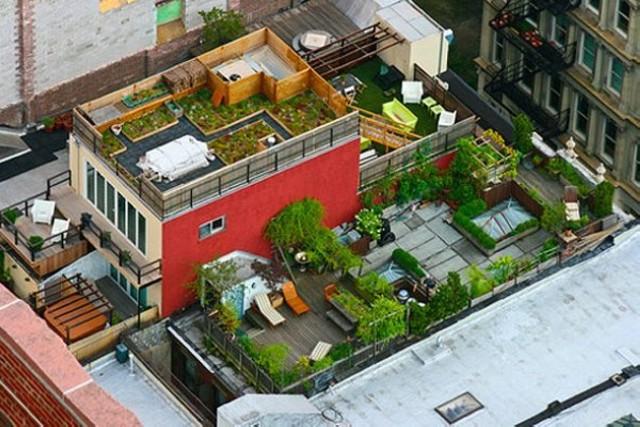 Зеленые растения на крыше дома