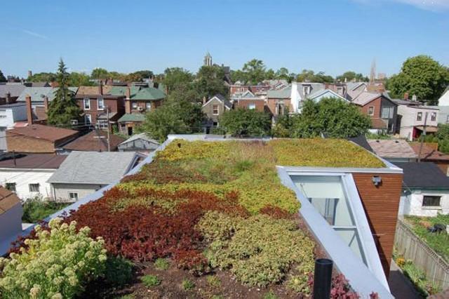 Осенние цветы на крыше дома