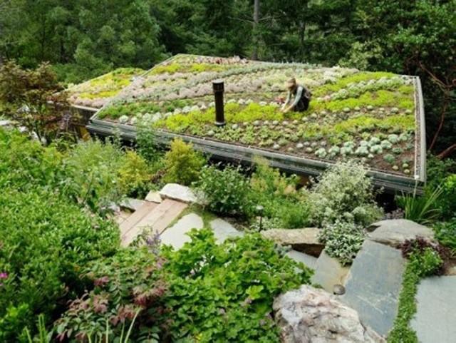 Садовник в процессе насаждения на крыше дома