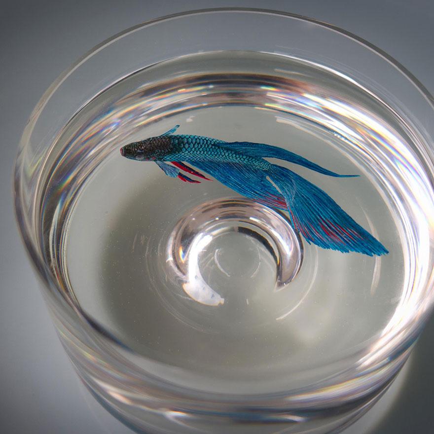 Картина рыбки в аквариуме