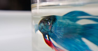 3Д рыбка