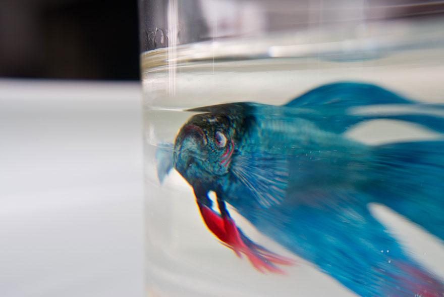 Рыбка в аквариуме на 3D картине