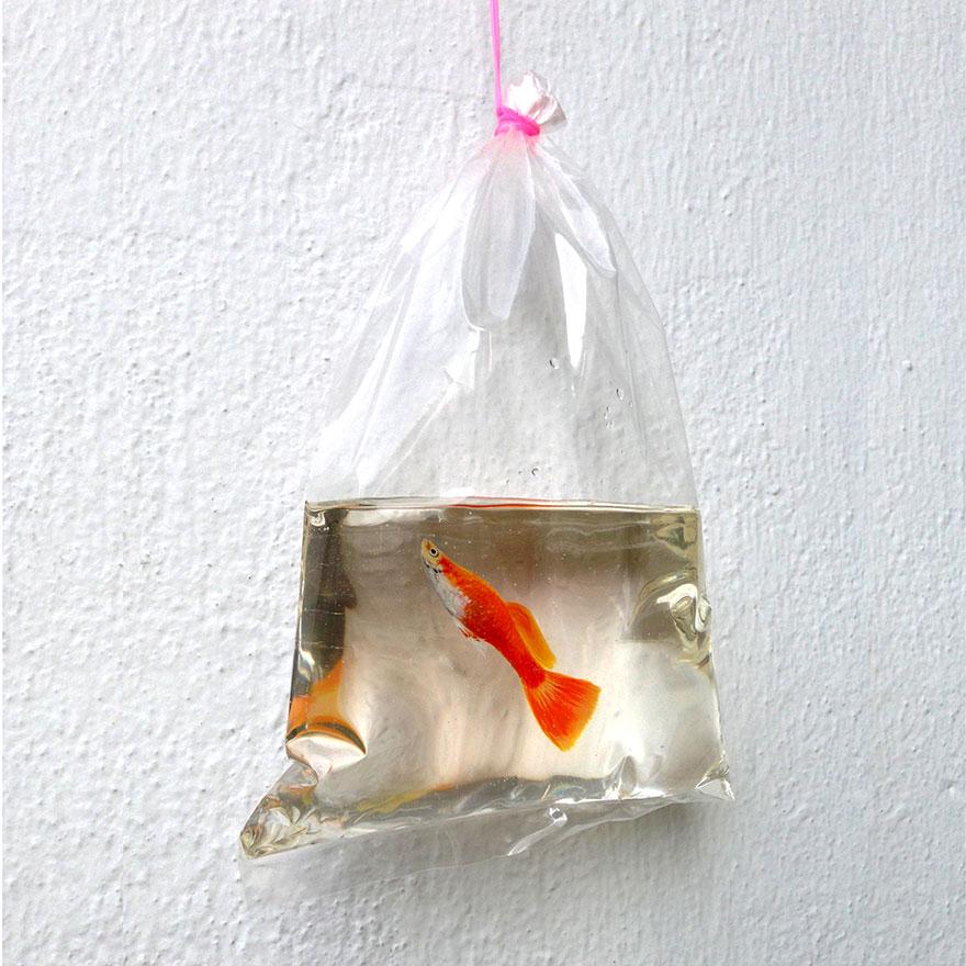 Картина переноски с золотой рыбкой