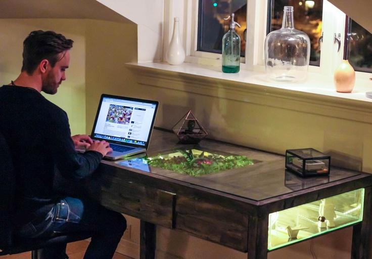 Дизайн рабочего стола с живым уголок под стеклом