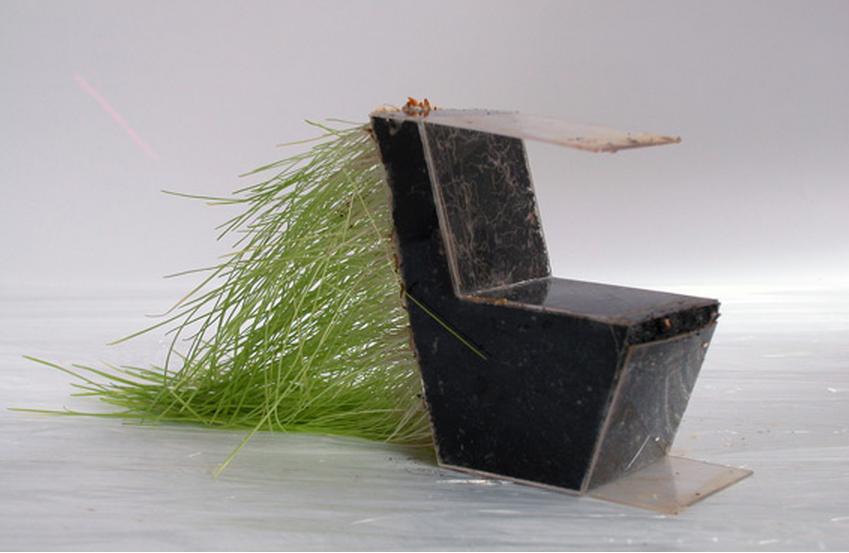 Пробный образец кресла из живых корней