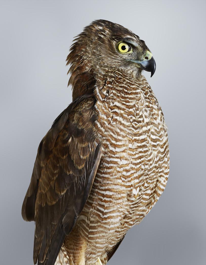 Портрет птицы