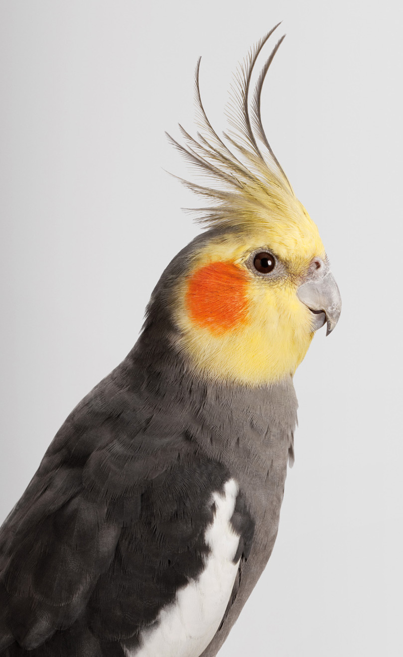 Original portraits of birds with a rather bright personality.