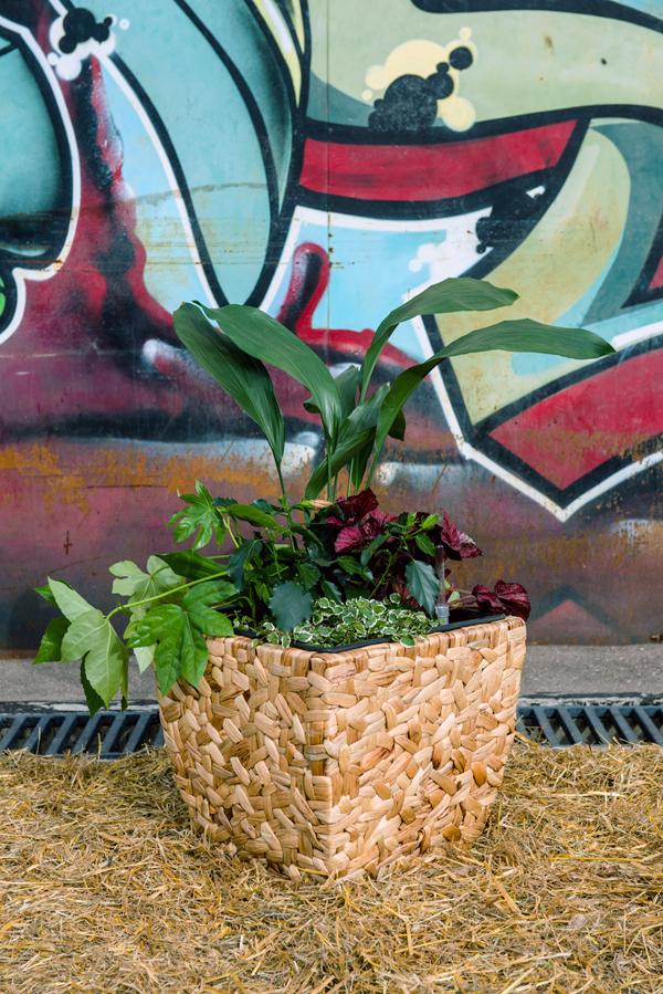 Растения в плетеном горшке