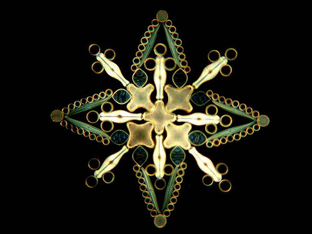 Абстракция из водорослей