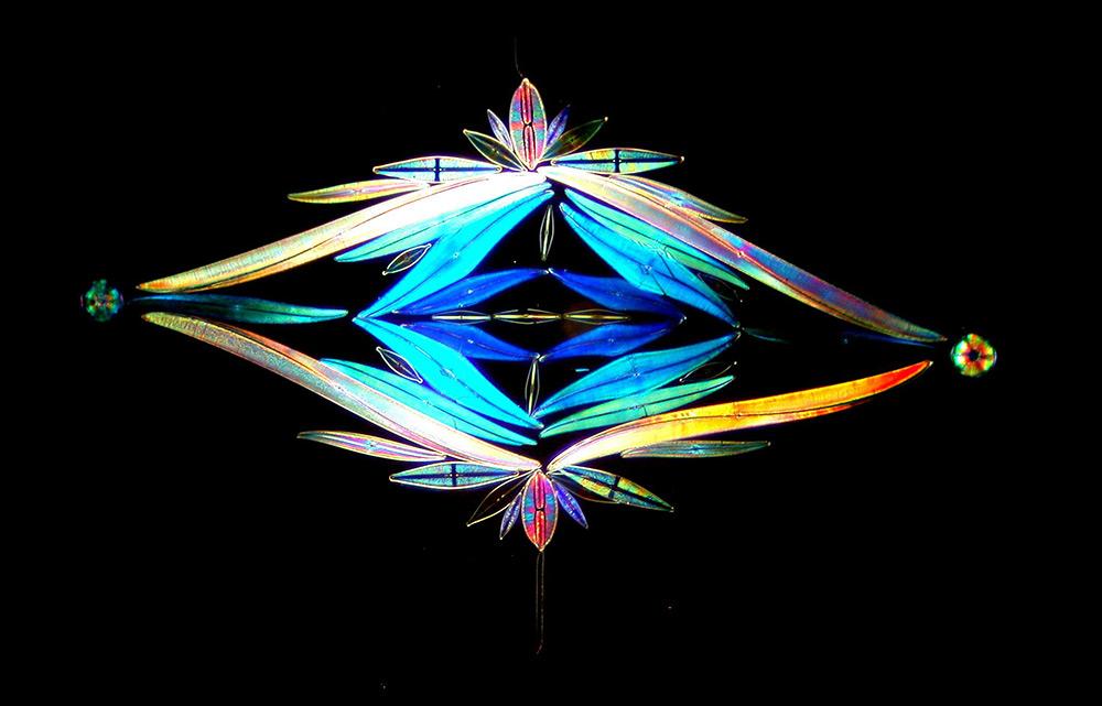 Художественный рисунок водорослей