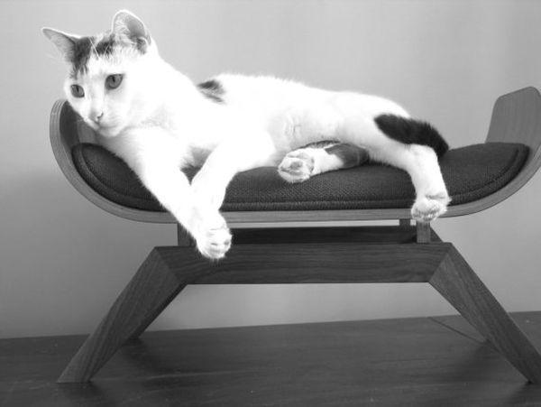 Изображение - Мебель для животных Furniture-for-pets-09