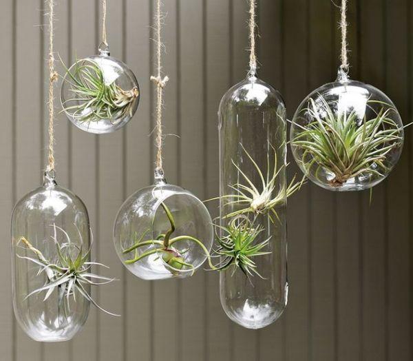 Стеклянные кашпо с растениями