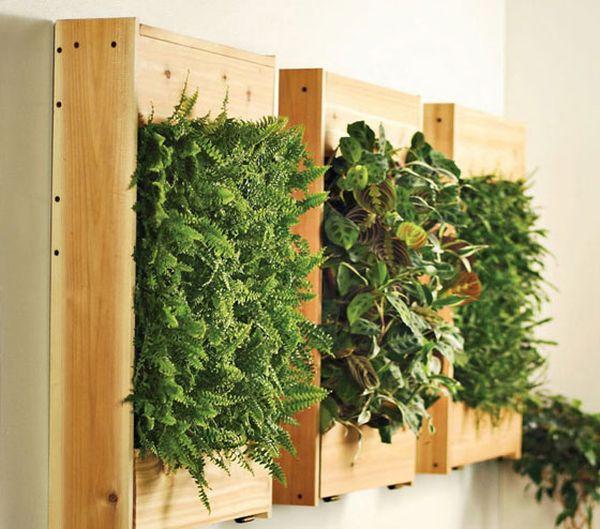 Деревянный ящик с растениями