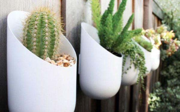 Растения в овальных горшках