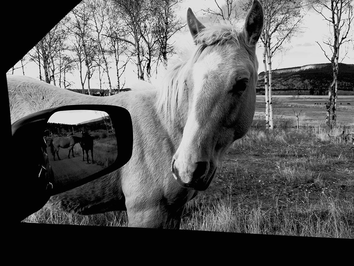 Снимок коня на Iphone