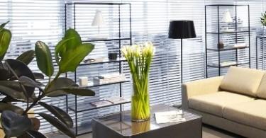 Фитодизайн в офисе