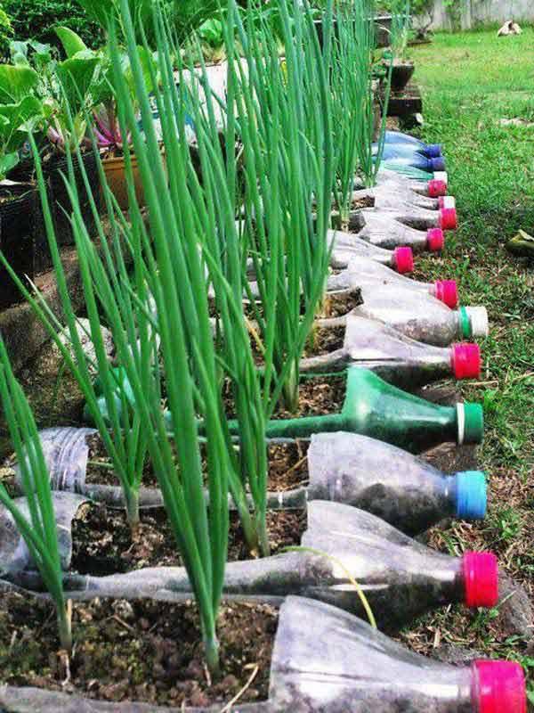 Контейнеры для растений из пластиковых бутылок