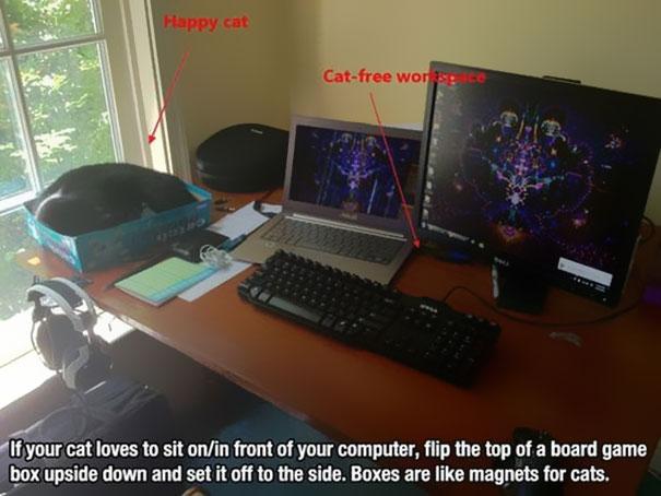 Коробка для сна кота на рабочем столе
