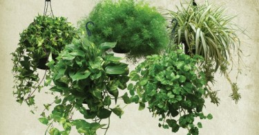 Цветочные растения в интерьере помещения