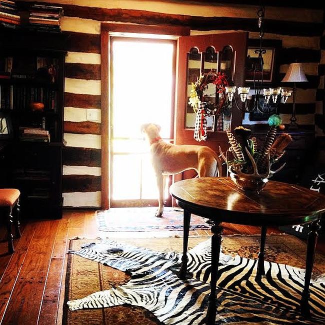 Ковер с орнаментом зебры на кухне