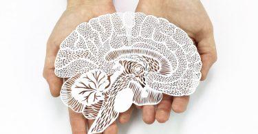 Вырезание из бумаги от Али Харрисон: анатомические иллюстрации в неожиданном формате