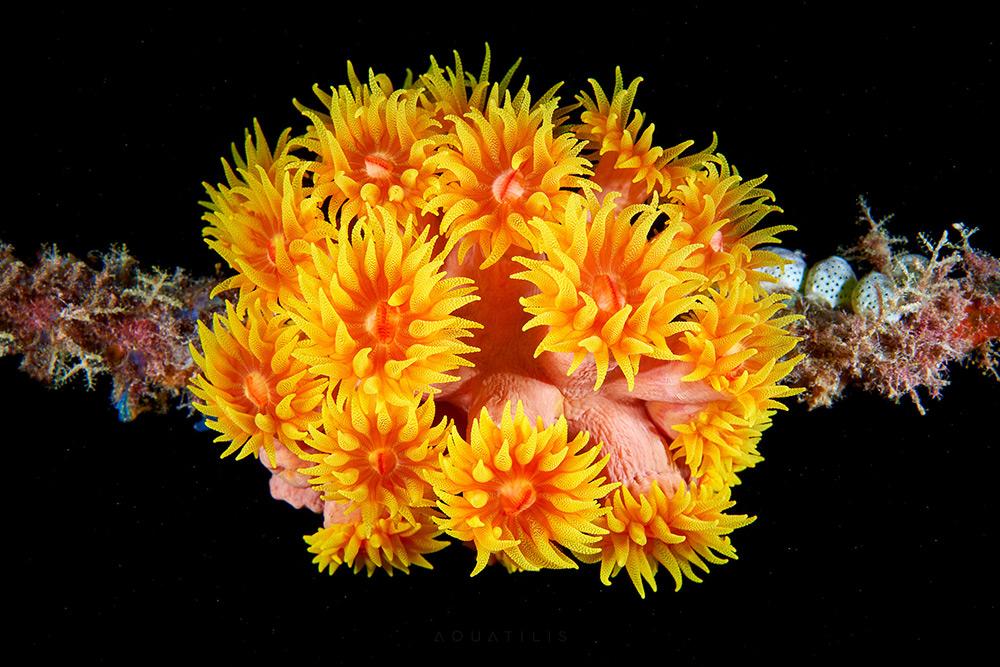 Александр Семёнов: подводные фотографии удивительных морских существ