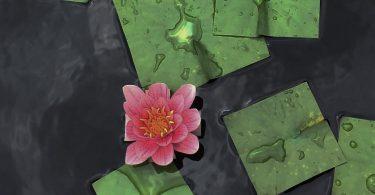 Баку Маэда: квадратные цветы и другие растения в коллекции цифровых изображений