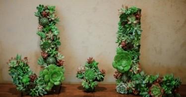beautiful house plants-04