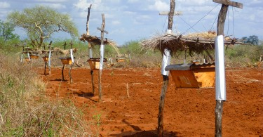 Африканские плантации, окружённые заборами-ульями для защиты от слонов