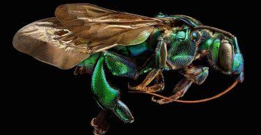Левон Бисс: макрофотографии насекомых с невероятной детализацией