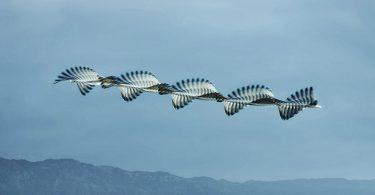 Пути птиц на небе в фотопроекте Ornitographies от Хави Боу