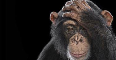 Брэд Уилсон: впечатляющие фотографии диких животных из серии Affinity
