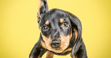 Встряхивающиеся щенята из коллекции Карли Дэвидсон