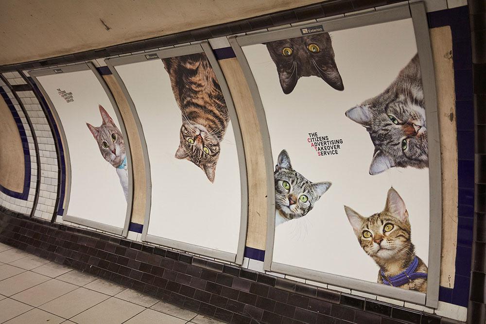 Беззаботное пространство без коммерческих объявлений:  фотографии кошек в Лондонском метро