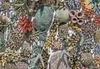 Кортни Мэттисон: керамические изображения морских обитателей