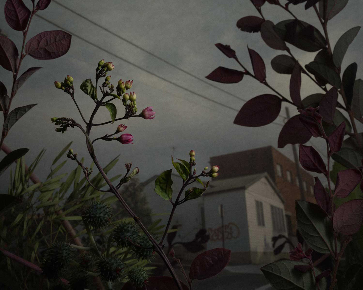 Даниэль Шипп: сорные растения в фотографической серии «Ботаническое исследование»