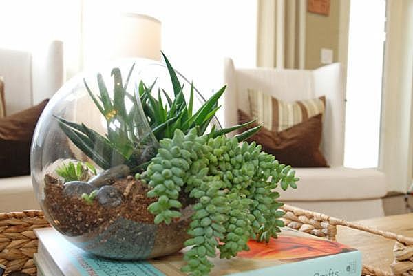 Стеклянный террариум для растений