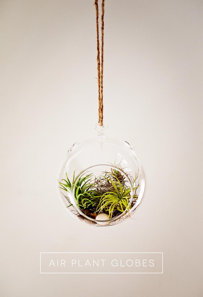 Воздушный террариум с растениями