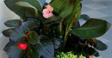 Цветочная композиция из тропических растений
