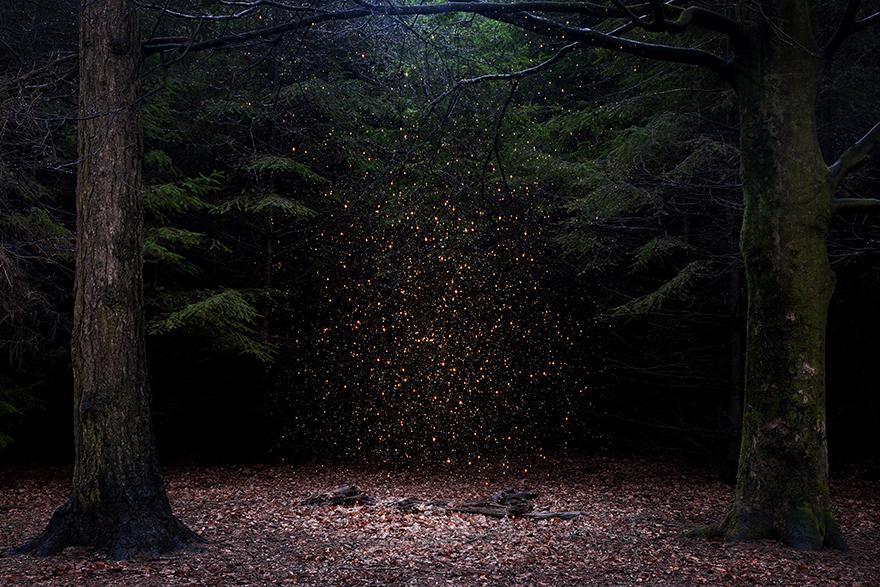 фото волшебный лес осмотре