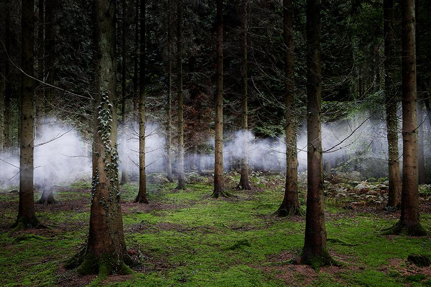 значение картинки таинственного леса позволило только