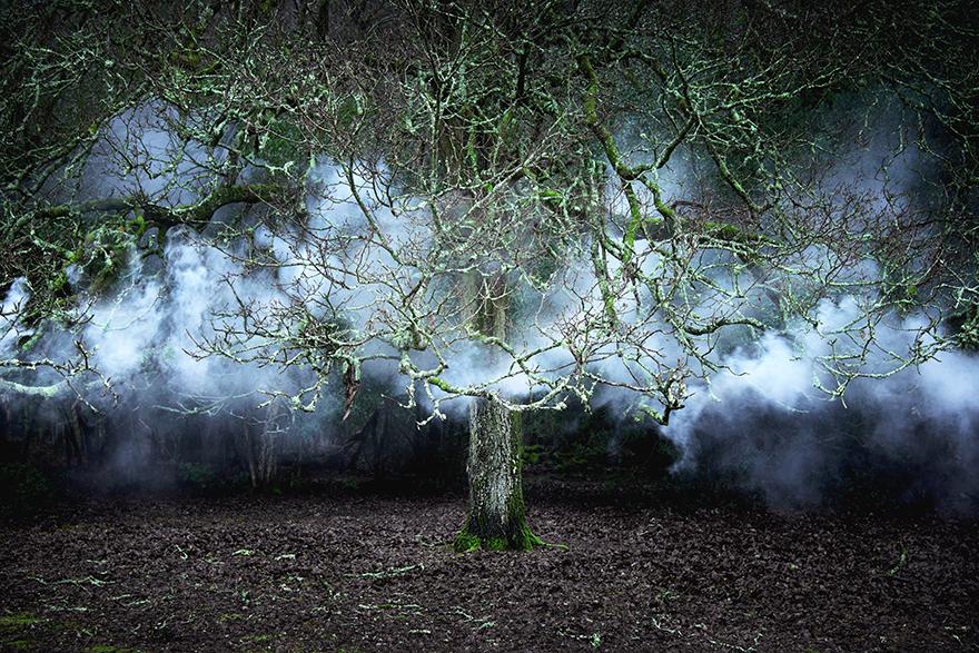 картинки призрачного леса салатах