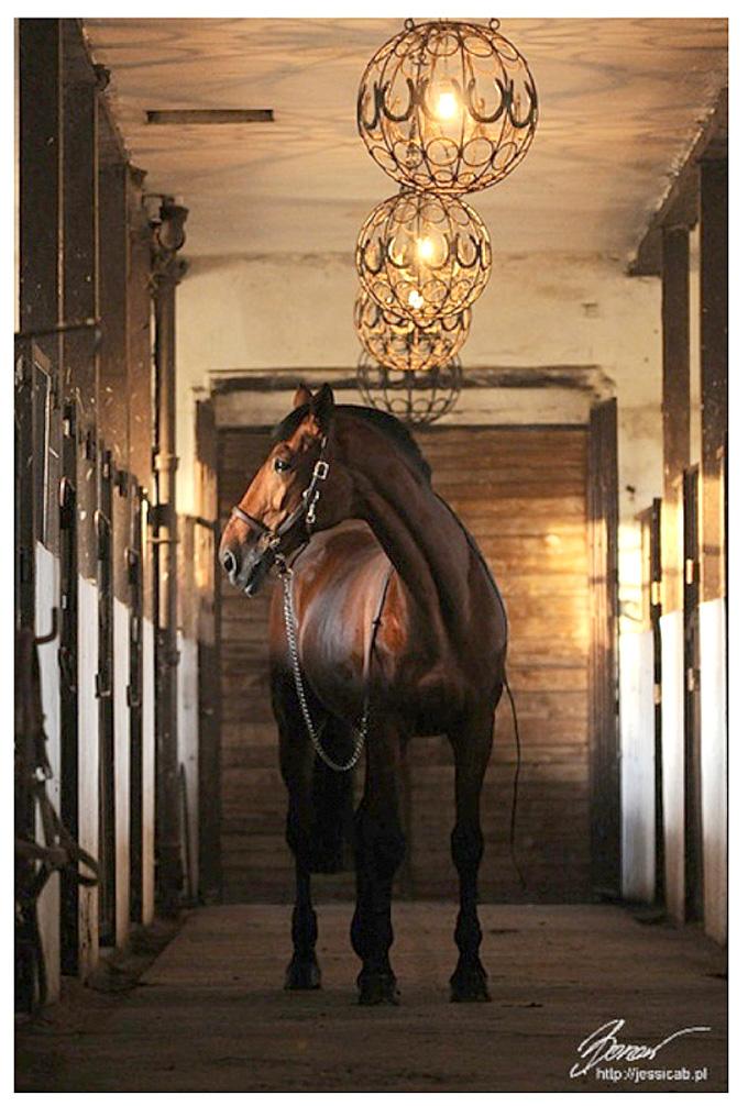 Прекрасное животное лошадь