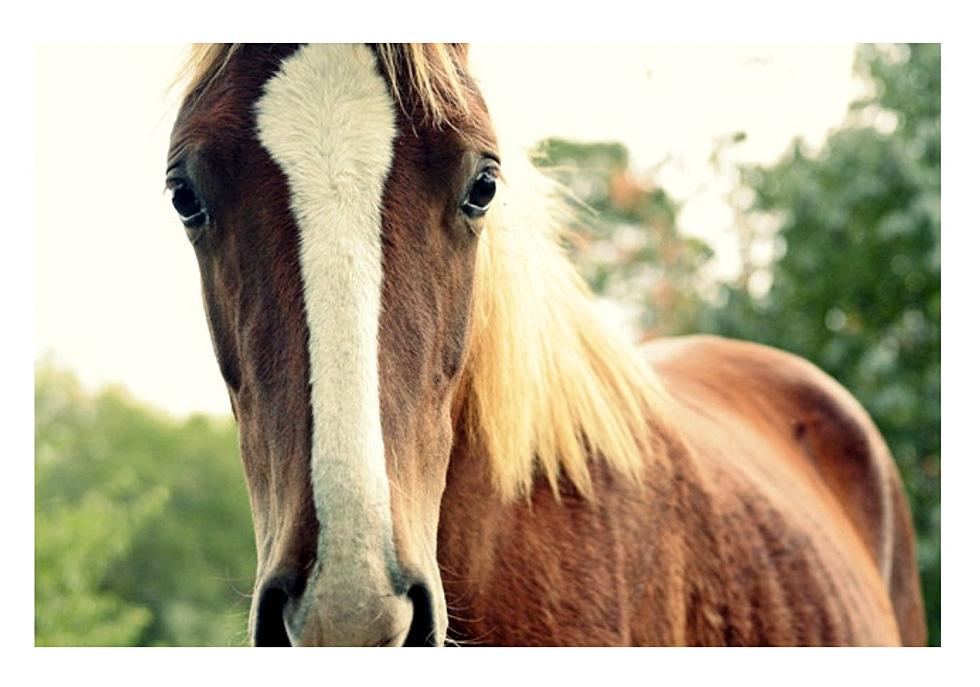 Прелестное животное лошадь