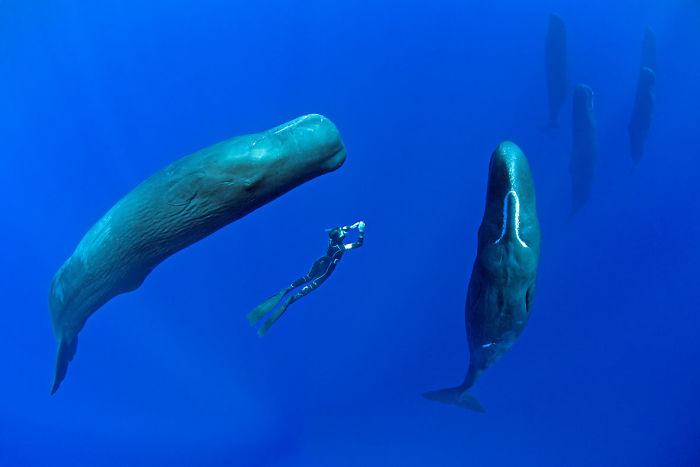 Тайны океанской фауны: спящие кашалоты в фотографиях Франко Банфи