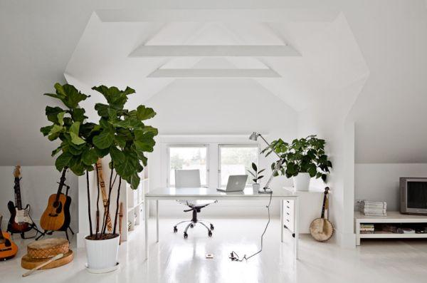 Растения в домашнем офисе