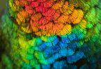Джесс Финдли: сенсационное фото колибри с рубиновым горлышком
