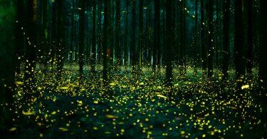 Летние фотографии живой природы Японии: танцевальное шоу светлячков