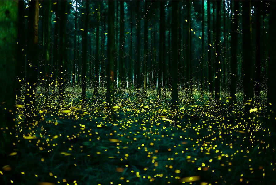 Для, картинки светлячки ночью
